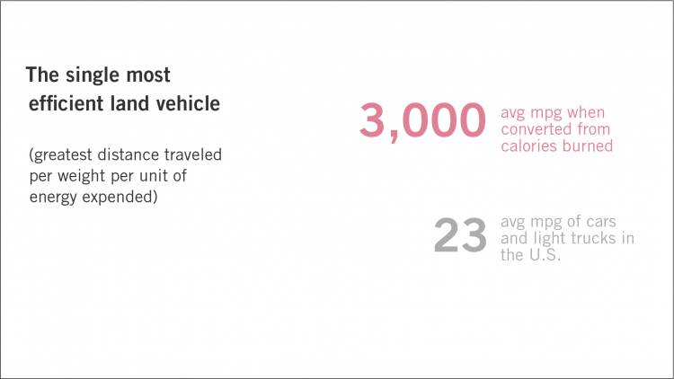 Bikes: the single most efficient land vehicle (measured as the greatest distance traveled per weight per unit of energy expended). Bikes get 3,000 avg. mpg when converted from calories burned. 23 is the avg. mpg. of cars and light trucks in the U.S.